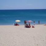 Il  salice della costa ionica